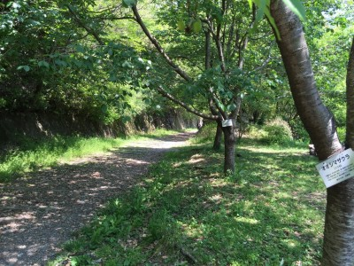 廃線敷ハイキングコース入口2