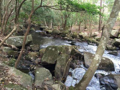 るり渓・渓流