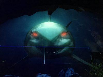 巨大な人喰い鮫