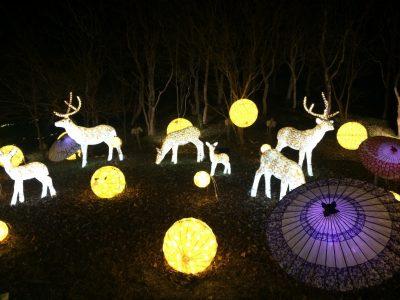「希望の灯火」雪と京灯りに包まれた光の世界