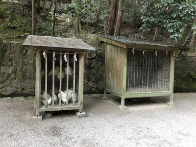 御神鶏・巣箱