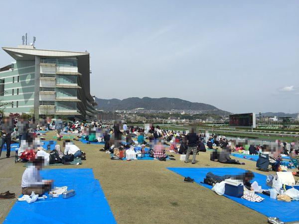 阪神競馬場の芝生