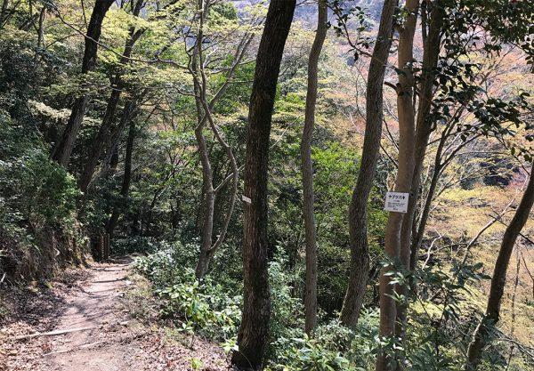隔水亭への山道