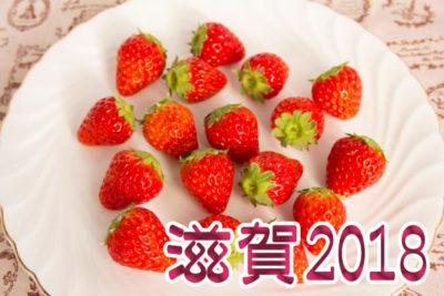 イチゴ狩り 予約 混雑 時期 期間 駐車場 スポット 品種 練乳 持ち帰り 関西 滋賀 2018