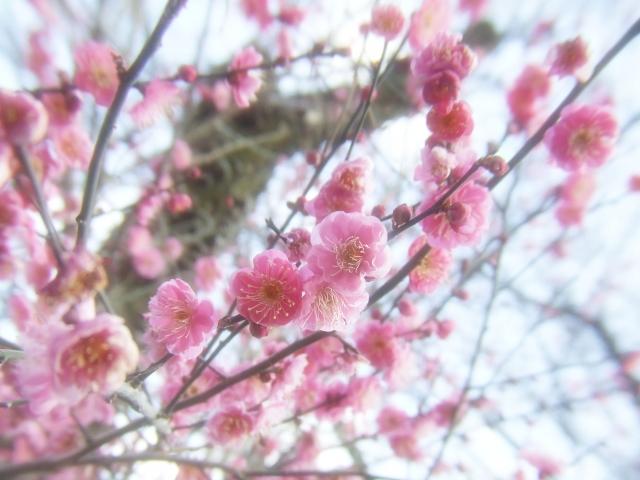 朝だ!生です旅サラダ 週末行ってみっか 三船美佳 3月3日 茨城 梅林