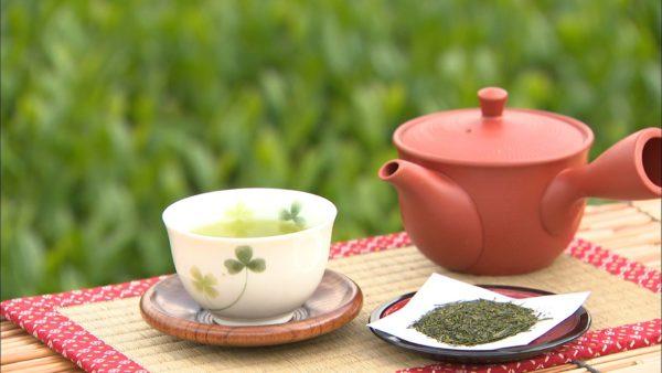 狭山茶 宮野園 茶摘み 本格手もみ製茶法体験講座