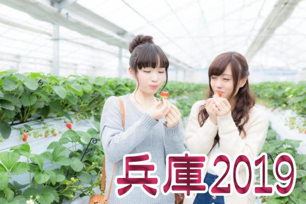 イチゴ狩り 予約 混雑 時期 期間 駐車場 スポット 品種 練乳 持ち帰り 関西 兵庫 2019