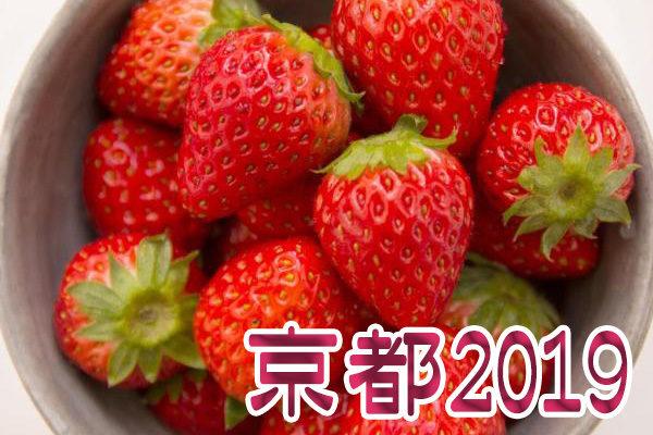 イチゴ狩り 予約 混雑 時期 期間 駐車場 スポット 品種 練乳 持ち帰り 関西 京都 2019