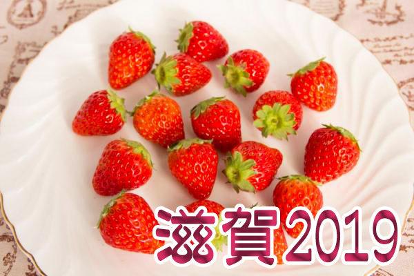 イチゴ狩り 予約 混雑 時期 期間 駐車場 スポット 品種 練乳 持ち帰り 関西 滋賀 2019