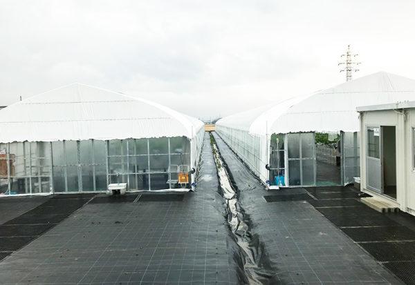滋賀 長浜 いちご農園 中川農園