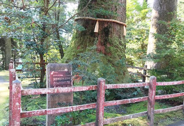 矢立の杉 箱根神社